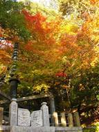 Dazaifu, svatyně a lesík