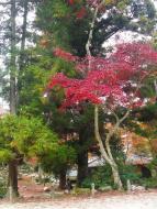 Mijadžima, zahrada Momidži