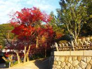 Kjóto, cesta k zahradě u Kijomizu-dera