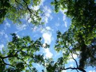 Stromy a nebe (Trees and sky)